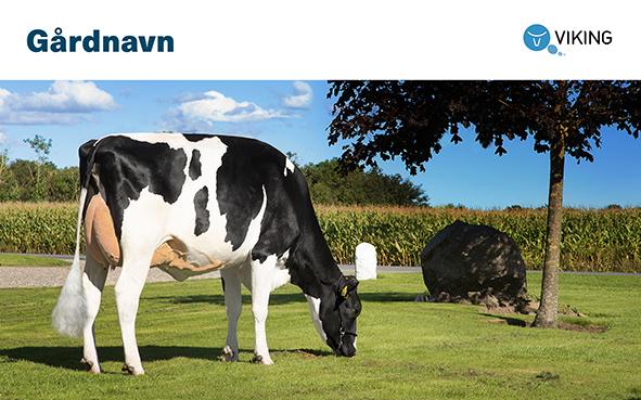101770 Gårdskilt Holstein 2000x1250mm.jpg