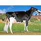VH Oyvind no 51814-4015 Højager Holstein, Rødding.jpg